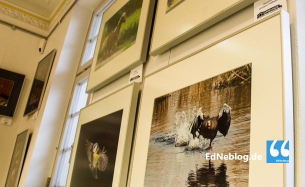 Eine startende Ente oder eine flatternde Meise. Die Motive und Themen, die sich die 15 Fotoclubs gesetzt haben, sind vielfältig.